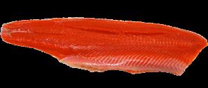 salmon salvaje