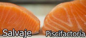 tipos de salmón fresco o crudo para un carpaccio